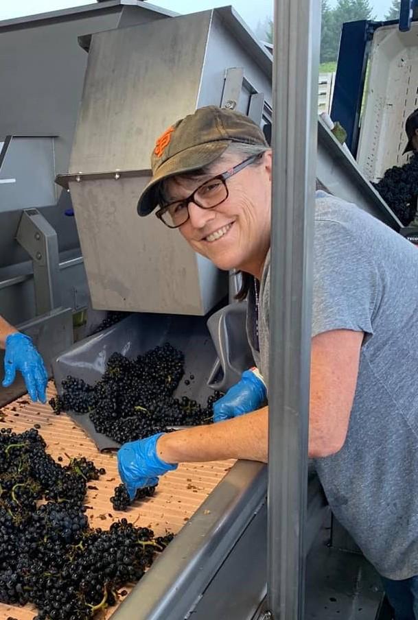 Jill sorting grapes at a wine harvest.